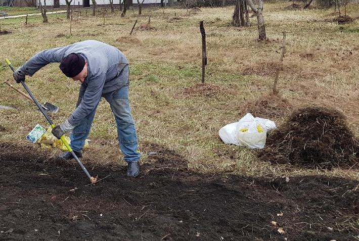 Wolontariusze BOŚ zakładają Tradycyjny Sad w Częstochowie