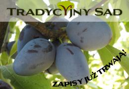 III Edycja Tradycyjnego Sadu - sadzimy stare odmiany śliw!